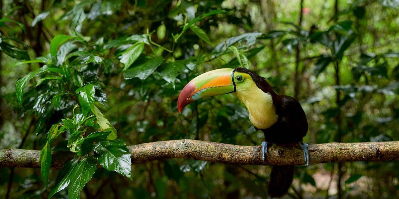 https://www.discoverbelize.bz/wp-content/uploads/2019/07/Belize-zoo-1280x640.jpg